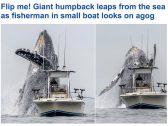شاهد: حوت ضخم يقفز بجانب مركب صيد صغير في كاليفورنيا بشكل مثير – فيديو وصور
