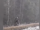 شاهد.. لحظة التهام دب لحيوان عملاق بعد أن أسقطه بالضربة القاضية