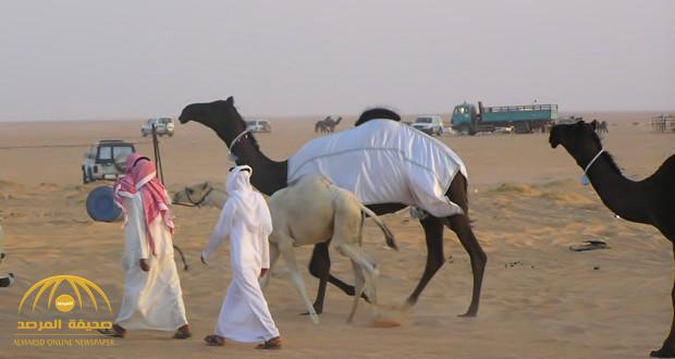 قطر تنقل 10 آلاف من الإبل إلى إيران .. ومربو المواشي يرفضون ويصفونه بالمدمر!