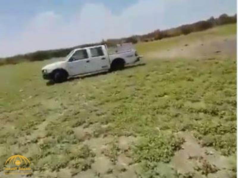 شاهد.. سيارات محملة بالأسماك بجوار بركة للصرف الصحي.. وأمانة الطائف تتدخل!