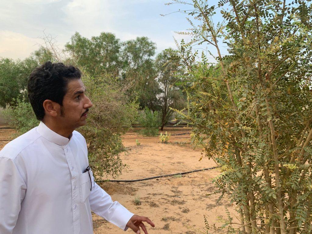 """بعد 6 سنوات من التجارب.. شاهد: مواطن سعودي ينجح في زراعة """"شجرة البخور"""" الأسطورية"""