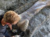 العثور على عظمة فخذ لديناصور عملاق ..  عاش على الأرض قبل 140 مليون سنة!
