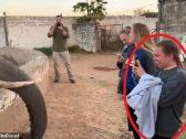شاهد.. فيل غاضب يصفع فتاة على وجهها بقوة بخرطومه أثناء محاولتها التقاط صورة له!