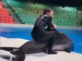 شاهد.. مدربة تجلس على ظهر أحد الدلافين في دبي.. وإجراء عاجل ضدها!