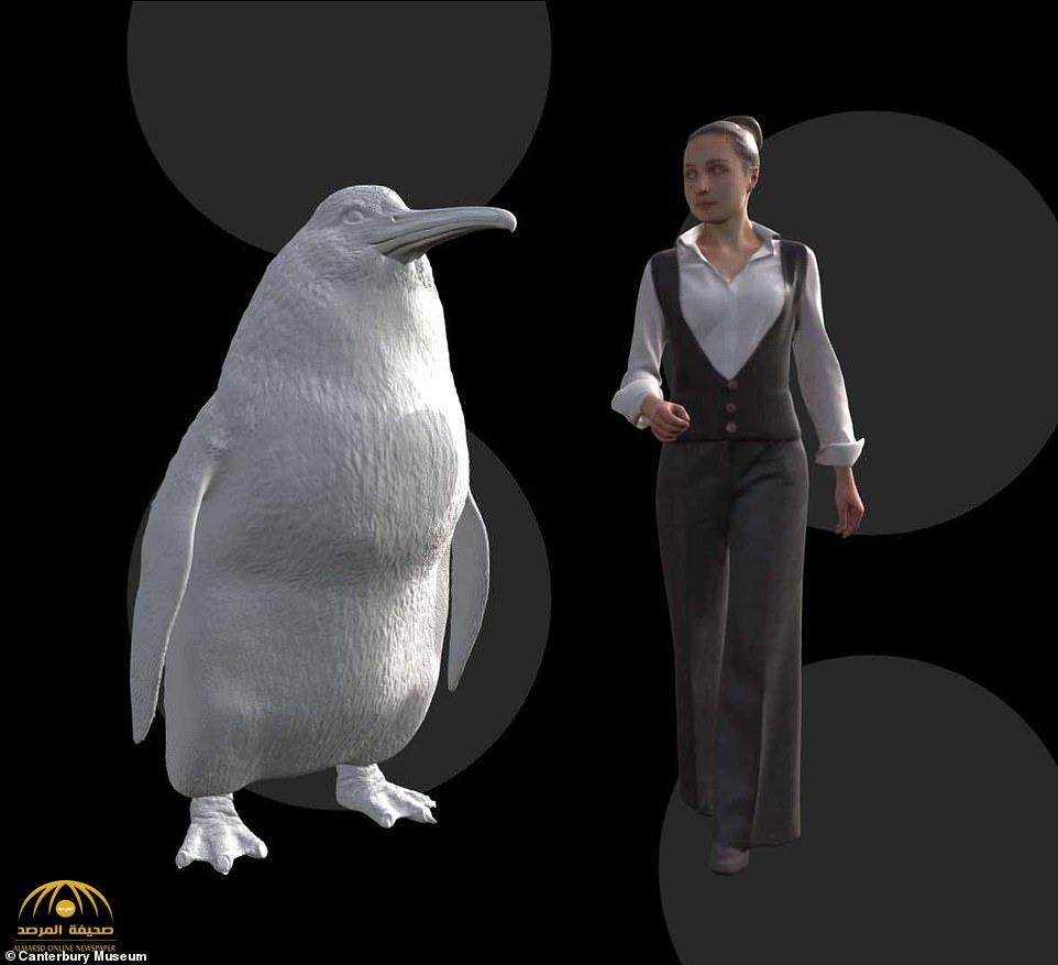 """علماء يعثرون على """"البطريق العملاق"""" بعد 66 مليون سنة من اختفائه.. والكشف عن سبب انقراضه !"""