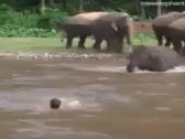 شخص يُمثّل أنه يغرق في نهر بتايلند.. شاهد: ردة فعل مفاجئة من أحد الفيلة!