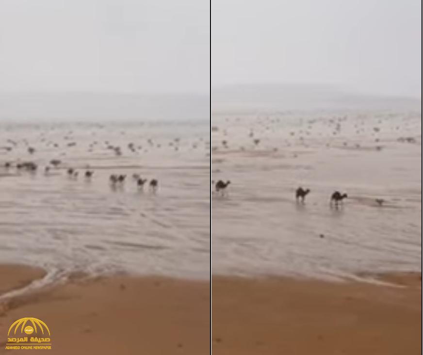 شاهد بالفيديو … مشهد بديع للأمطار تروي  الأرض بنجران ومجموعة من الإبل وسط الأودية!