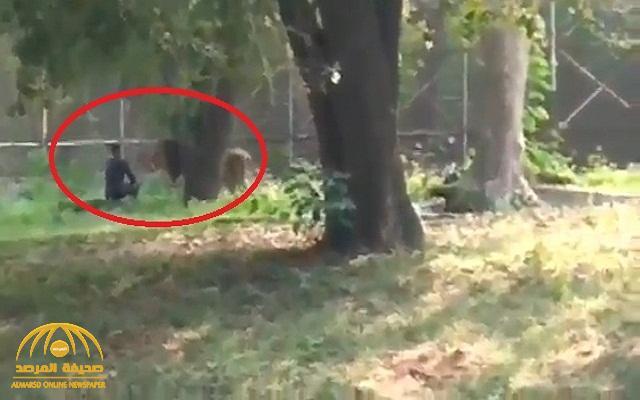 """شاهد: شاب """"سكران """" يتحدى أسد ويجلس أمامه وجها لوجه داخل حديقة للحيوانات في الهند"""