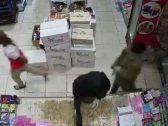 شاهد : ملثمون يحملون سلاح رشاش يقتحمون بقالة داخل محطة بنزين بتبوك .. وكاميرا توثق تفاصيل الجريمة
