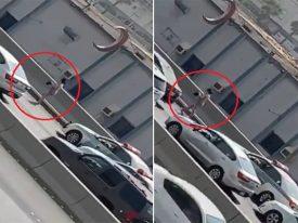 بالفيديو : فتاة تسير بملابس فاضحة على طريق عام بجدة !