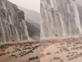 الكشف عن حقيقة الفيديو المتداول لتساقط صخور على السيارات بطريق الهدا الطائف وتوقف حركة المرور ! – فيديو
