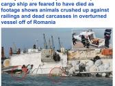 شاهد: غرق سفينة شحن محملة بـ15 ألف رأس غنم في طريقها إلى المملكة– فيديو وصور