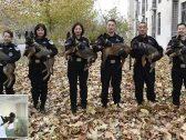 شاهد ..  الصين تستنسخ 6 كلاب سوبر طبق الأصل