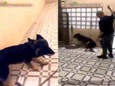 شاهد .. فيديو صادم لشخص يعنف كلباً بعد تخريب استراحته