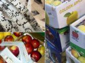 """شاهد: إيران تغلف """"التفاح"""" داخل كراتين بقصاصات ممزقة من """"القرآن """" وتصدره للكويت!"""