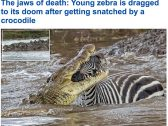 بالصور : شاهد.. حمار وحشي ينجو بأعجوبة من فكي تمساح ضخم بعد خوضه معركة شرسة