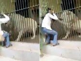 """""""مشهد مروع"""".. شاهد : أسد يُمزق ذراع حارسه أمام أعين الزوار"""