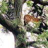 أسد جائع يخطف طفل من رقبته داخل حديقة بكاليفورنيا.. والأب يلجأ لحيلة غير متوقعة لإنقاذه!