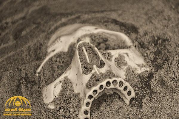 علماء يكشفون عن مكان تطور أول كائن بشري في التاريخ على كوكب الأرض