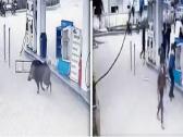 شاهد: خنزير بري مسعور يهاجم عمال محطة وقود بشكل مرعب !
