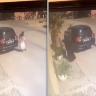 شاهد.. ردة فعل أسرة سعودية بعدما تفاجأت بكلاب ضالة خارج المنزل !