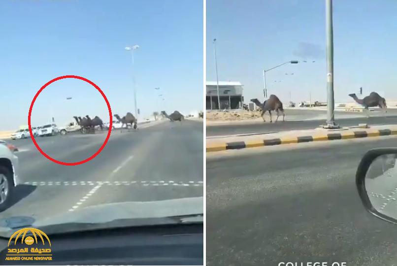 شاهد .. سائق يوثق مرور قطيع من الإبل لطريق عام … وتصرف غريب من الراعي يتسبب في حادث !