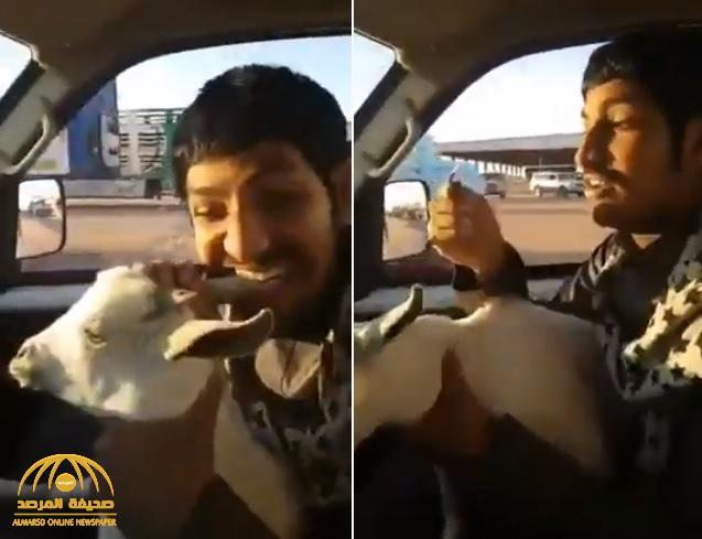 """""""إش ذا الفيد معك يا علي"""".. شاهد: شاب ينهش أذن ماعز ويتسبب في قطع جزء منها"""