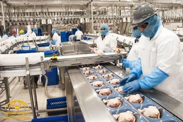 رويترز: حظر تصدير الدواجن من مصنعين في البرازيل  إلى السعودية
