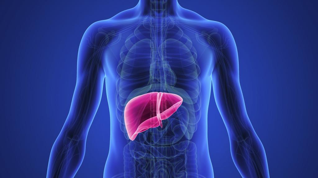 الكشف عن الأعراض الأولى لسرطان الكبد .. إذا ظهرت راجع طبيبك فوراً