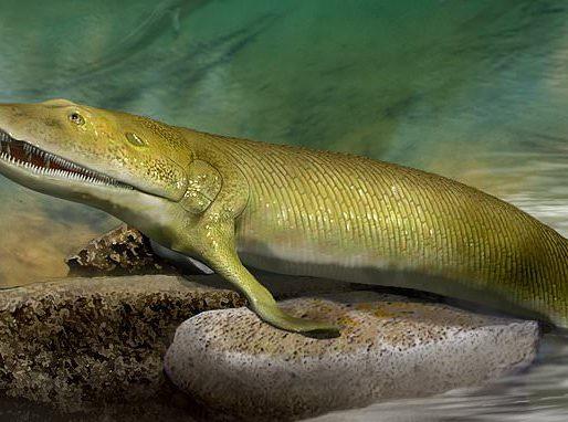 """""""زعانفه حلت اللغز"""".. بالفيديو: اكتشاف مخلوق بحري عاش قبل ٣٨٠ مليون سنة يمثل حلقة مفقودة في نظرية التطور"""