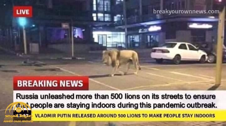 حقيقة نشر بوتين 500 أسد في شوارع روسيا لتطبيق نظام الحجر الصحي بالقوة