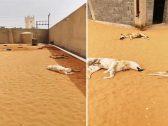شاهد .. شخص ينهار باكياً بعد مفاجأة صادمة لحظة دخوله حوش يربي بداخله كلاب في الرياض !