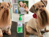 """شاهد : """"كلب"""" يثير إعجاب من يقابله و""""لحيته"""" تجعله نجما مشهورا- صور"""