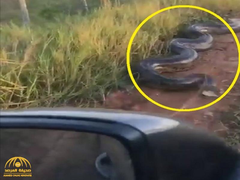 شاهد.. فيديو مرعب لحية ضخمة ترفع رأسها وتهاجم ركاب شاحنة على الطريق!