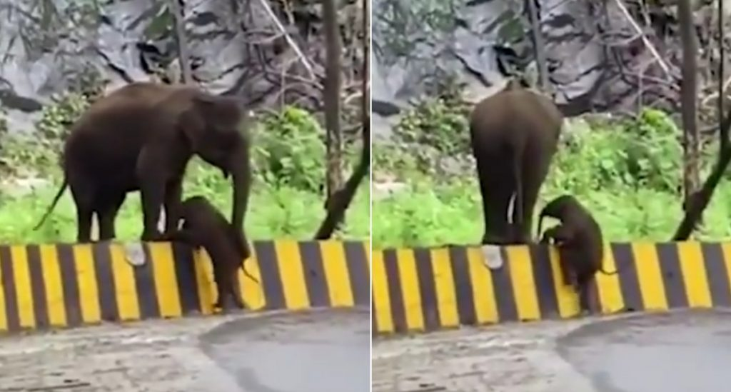 شاهد.. فيل يساعد صغيره على تخطي الحاجز بطريقة مدهشة تشبه الإنسان
